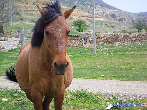 اسب خوش عکس!! - روستای قلعه - 23 فرودین 1392 - عکس از عطیه نظری