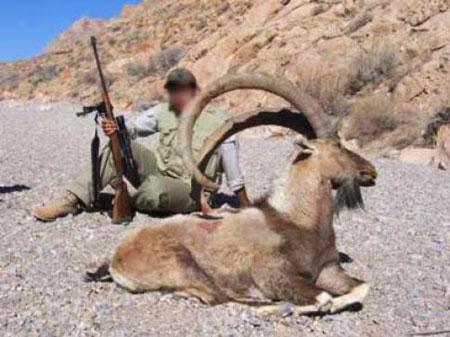 عکس حیوانات شکارچی